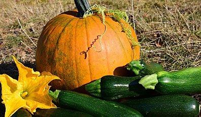 Waar Wordt Halloween Gevierd.Halloween Kelten Allerzielen En Pompoen
